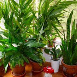Ta in naturen – Växters positiva hälsoeffekter