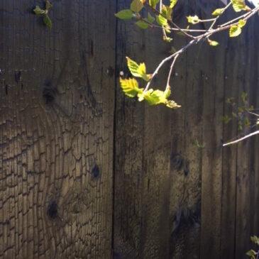 Shou Sugi Ban -TREE söker en underhållsfri och giftfri träbevaringsteknik i skärgårdsmiljö