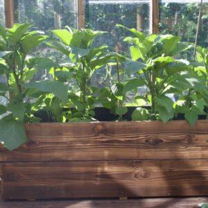 Odlingslådor för orangeri och växthus