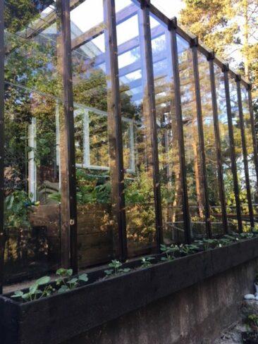 Orangeri, växthus i bränt trä