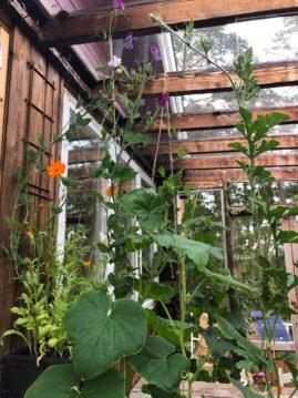 Orangerie by TREE gurkplantor